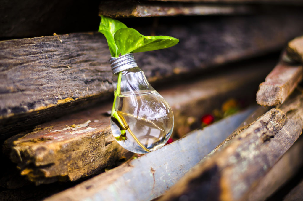 Recycled light bulb with plant in it